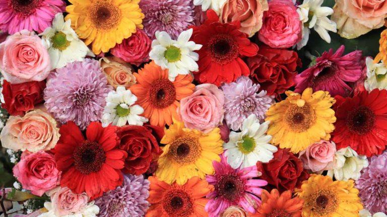 Imagens de diversas flores
